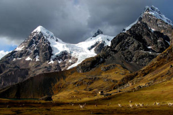 snow capped mountains with grass and sheep in foreground