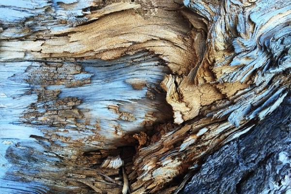Image of blue and brown tree bark