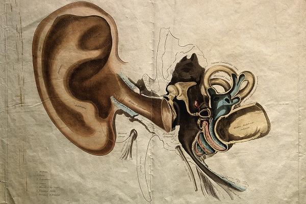 adult deafness
