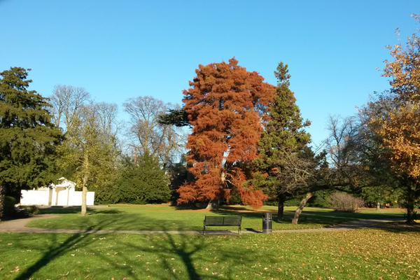 Duke of Chandos and Canons Park image depicts park landscape with lawn and trees in autumn