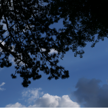 An outdoor photograph depicting blue skies, clouds and tree silhouettes