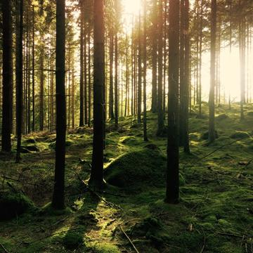 Sunlight filtering through the forest trees.